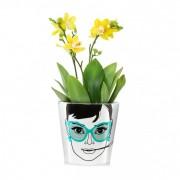 Ghiveci pentru flori, DONKEY Elegant Audrey Small