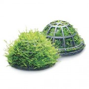 Moss Dome With Riccia