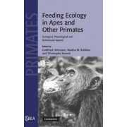 Feeding Ecology in Apes and Other Primates by Gottfried Hohmann