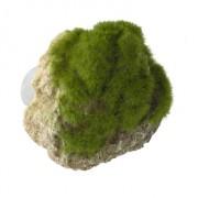 Moss Stone met Zuignap S