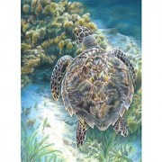 Royal Brush Color Pencil by Number Kit 8.75 by 11.75-Inch Sea Turtle