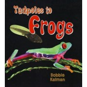 Tadpoles to Frogs by Bobbie Kalman