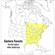 A Field Guide to Eastern Forests, North America by John C. Kricher