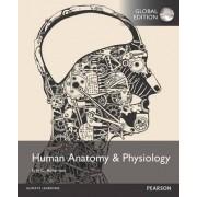 Human Anatomy & Physiology with MasteringA&P by Erin C. Amerman