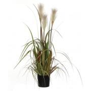 Mica Decorations - Pluimgras Foxtail - In plastic pot