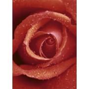 1art1 40506 - Flores - rosa roja 4 piezas, foto papel pintado poster fondo de pantalla (254 x 183 cm)