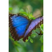 Mind Blowing Blue Butterfly 200 Page Lined Journal by Mindblowing Journals
