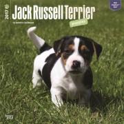 2017 kalender met Jack Russell pups honden