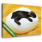 Párnán alvó kutyakölyök (35x25 cm, Vászonkép )