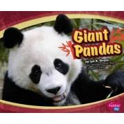 Giant Pandas by Lyn A Sirota