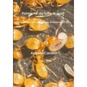Formiche Da Tutte Le Parti - Suggerimenti Per L'Allevamento Di Formiche (Eco)