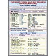 Femenin et pluriel des noms communs (dans l'ortographe) Formation du femenin. Formation du pluriel./L'article partitif. Omissiion de l'article.