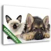 Kutya és macska barátsága (40x25 cm, Vászonkép )