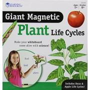 Learning Resources LER 6045 - il ciclo di vita di una pianta