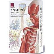 Anatomy Flash Cards by Scientific Publishing