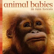 Animal Babies in Rain Forests by Kingfisher Books