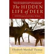Hidden Life of Deer by Elizabeth Marshall Thomas