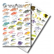 Guide to Reef Fish of the Virgin Islands