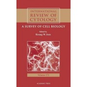 International Review of Cytology: v. 173 by Kwang W. Jeon