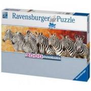 Пъзел от 2000 части - Панорама Зебри, Ravensburger, 704012