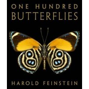 One Hundred Butterflies by Harold Feinstein