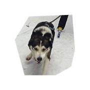 Skijöring - na běžkách taženi psy, , 2 osoby, 3 hodiny