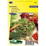 Sla Snijsla Gemengde Sla Gastronome zaad, groentezaden