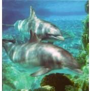 Regnbågsvävar Dolphin Card 1