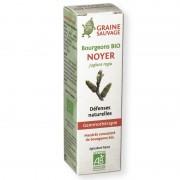 Bourgeons de Noyer Bio - défenses naturelles - 15ml