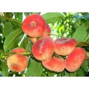 Piersic Remeny (fruct plat)