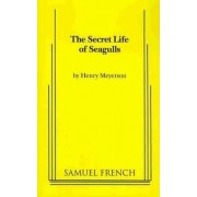The Secret Life of Seagulls by Henry Meyerson