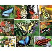 Springbok Puzzles Butterflies (Compact-Box Format)Jigsaw Puzzle (1000 Piece)