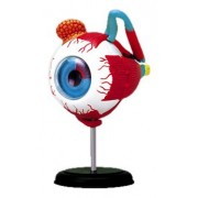 4D VISION Human eye anatomy model puzzle No.02 solid Skynet