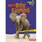 Meet a Baby Elephant by Samantha S Bell