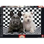 Puzzles Educa - Terriers blanco y negro, puzzle de 500 piezas (15508)