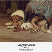 Dragoste canina (kit goblen)