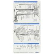 Neurology Pocketcard Set by Sebastian Stuckrad-Barre