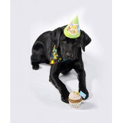 """The Gift Box Happy Birthday To That Special Friend """"Le chien"""