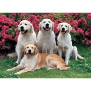 Tomax Golden Retrievers 500 Piece Jigsaw Puzzle