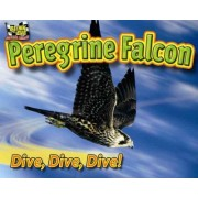 Peregrine Falcon by Natalie Lunis
