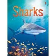 Sharks by Catriona Clarke