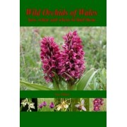 Wild Orchids of Wales by Sue Parker