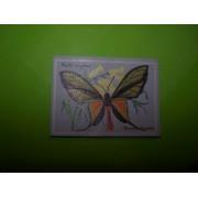 Papilio Paradisea