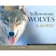 Yellowstone Wolves in the Wild by James C Halfpenny
