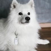 Tractive Pet Remote Trare1- Dispozitiv Dresaj Pet Remote