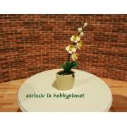 Orhidee (Phalaenopsis) alba in ghiveci ornamental - miniatura