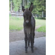The Baby Donkey Journal: 150 Page Lined Notebook/Diary