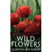 Wild Flowers of Britain and Europe by Margot Spohn