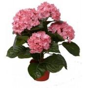 Kunst hortensia plant roze 36 cm