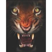 Un Tigre En Colere: Recueil de Poemes